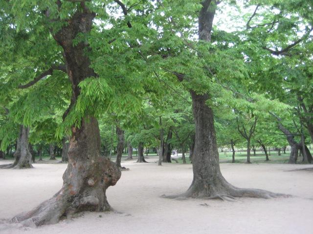 Gyerim Forest