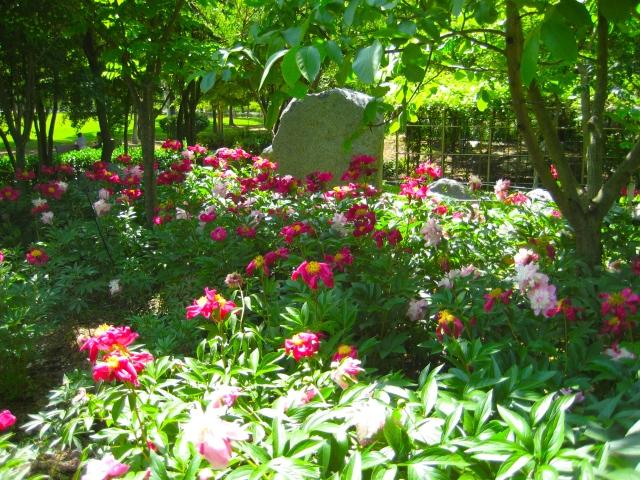 at Daegu Arboretum